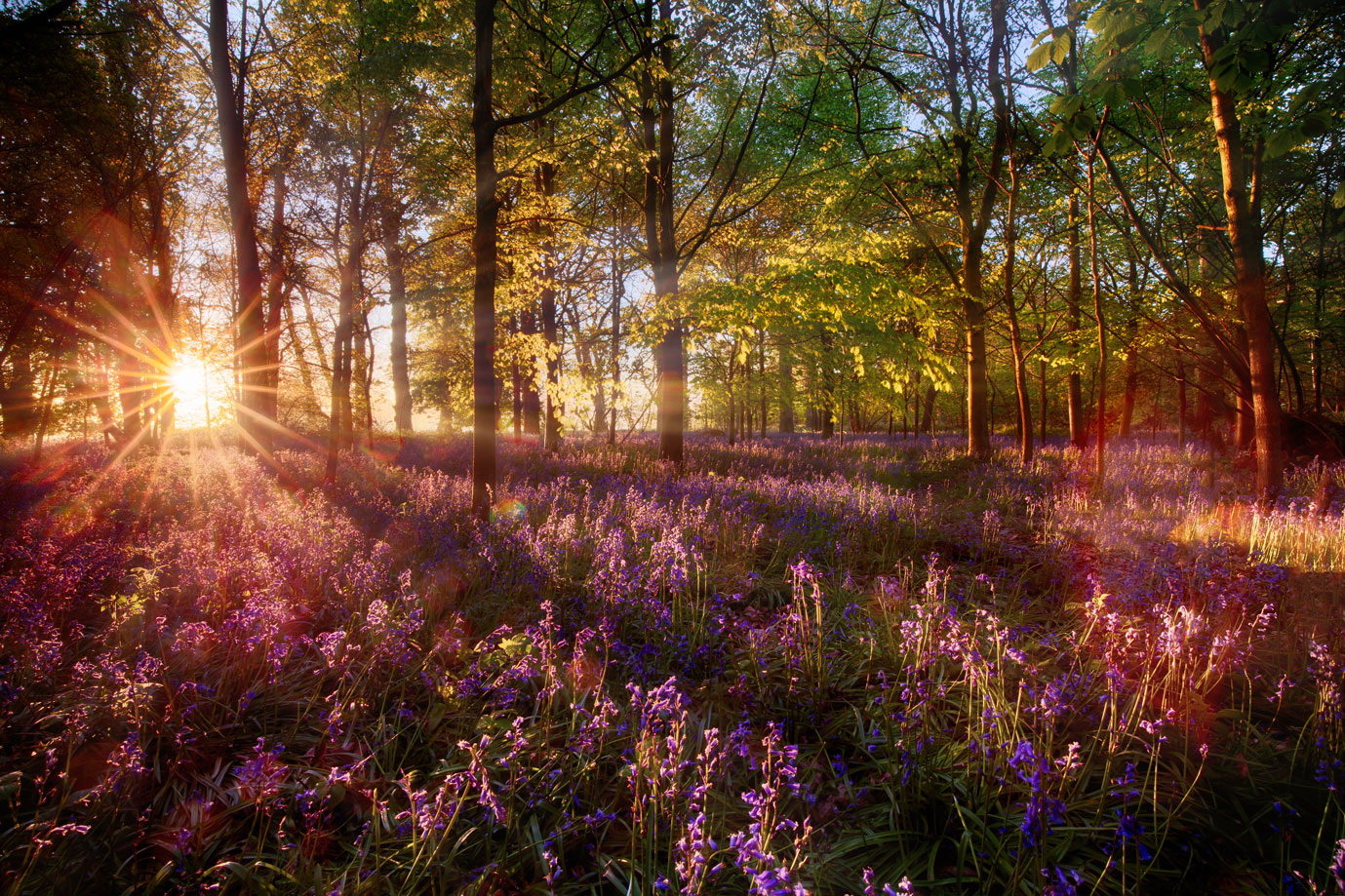 sun shining through forest landscape with abundant flowers springing from the ground